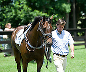 Catoosa takes a stroll in the Fair Hill paddock alongside former rider David Bentley.