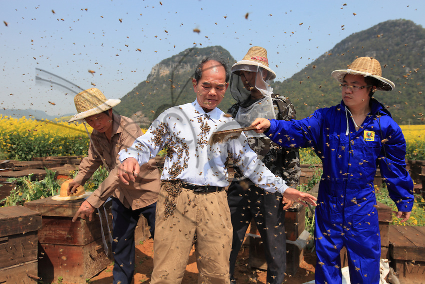 His body covered in bees, Mister Yang Chuan calmly waits while his assistants get the thousands of bees off him.