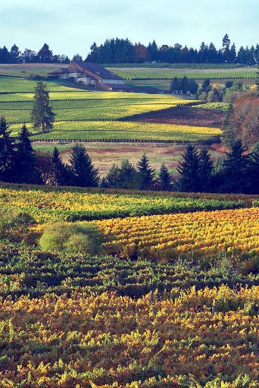 Sokol Blosser Vineyards in fall color. Oregon
