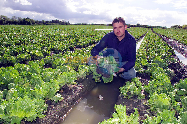 For Farming Independent.paul carroll with a head of the destroyed Lettice as the water runns down the channells in the field.Picture Fran Caffrey Newsfile...This Picture is sent to you by:..Newsfile Ltd.The View, Millmount Abbey, Drogheda, Co Louth, Ireland..Tel: +353419871240.Fax: +353419871260.GSM: +353862500958.ISDN: +353419871010.email: pictures@newsfile.ie.www.newsfile.ie