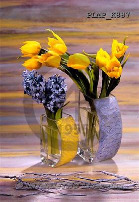 Marek, FLOWERS, BLUMEN, FLORES, photos+++++,PLMPK887,#f# tulips