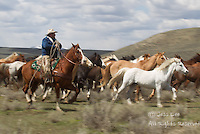 Cowboy herding horses Cowboys working and playing. Cowboy Cowboy Photo Cowboy, Cowboy and Cowgirl photographs of western ranches working with horses and cattle by western cowboy photographer Jess Lee. Photographing ranches big and small in Wyoming,Montana,Idaho,Oregon,Colorado,Nevada,Arizona,Utah,New Mexico.