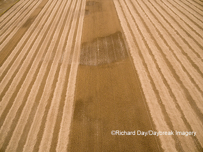 63801-09503 Soybean Harvest, Soybean field partially harvested - aerial - Marion Co. IL