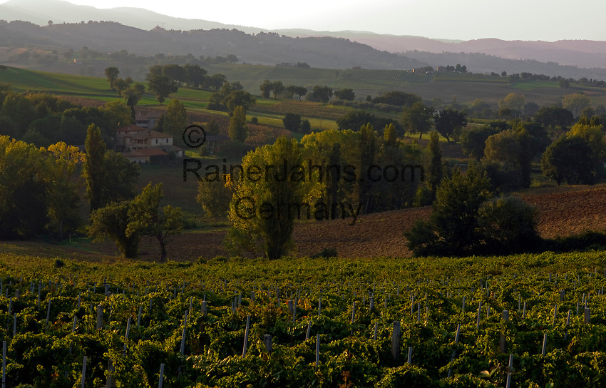 Italien, Umbrien, Landschaft bei Foligno - Weinanbau | Italy, Umbria, landscape near Foligno - wine growing