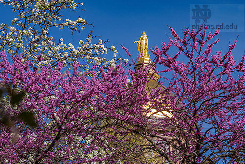 April 17, 2017; Main Building, Spring 2017 (Photo by Matt Cashore/University of Notre Dame)