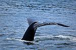 AK - Juneau Wildlife