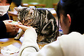 "January 15, 2015, Tokyo, Japan : Customers enjoy relaxing with cats at the ""Temari No Uchi"" Cat Cafe in Tokyo, Japan. Temari No Uchi, a Neko Cafe (cat cafe) based in Kichijoji where visitors can watch and interact with 19 cats whilst eating or having a coffee break. The store opened in April 2013 and allows to customers to play with cats and to escape from the stresses of the city life. The entrance fee is 1200 JPY (9.75 USD) on weekdays and 1600 JPY (12.99 USD) on weekend with discounts after 7pm. Drinks and food are charged separately. According to the shop staff most visitors are Japanese women but also men and children visit this cafe. The fist cat cafe in the world opened in Taipei, Taiwan in 1998, and the fist Japanese store was opened in Osaka in 2004. (Photo by Rodrigo Reyes Marin/AFLO)"