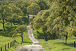 Oak lined country road during spring, Amador County, Calif.