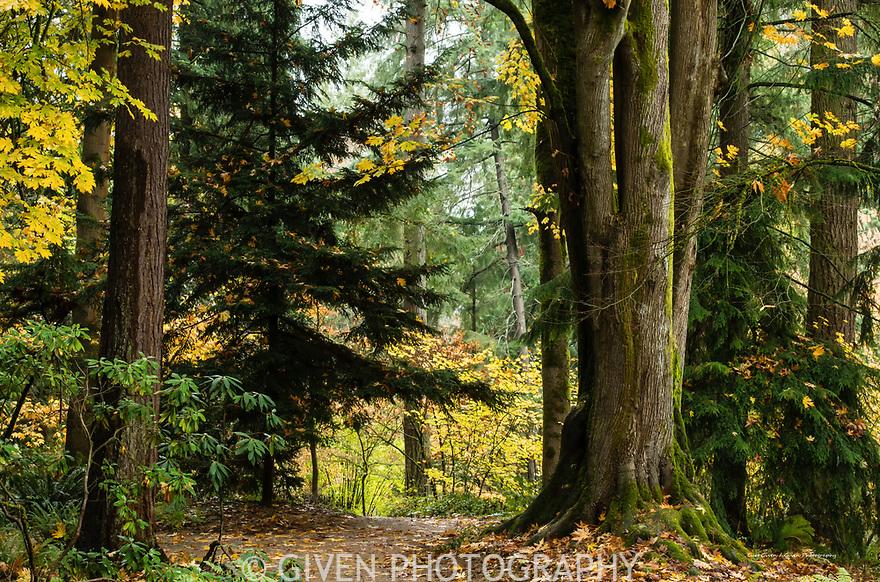Autumn trail, Washington Park Arboretum, Seattle
