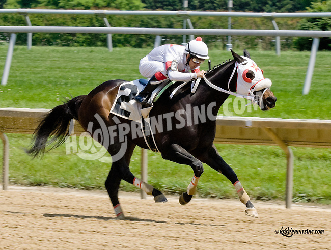 Coldback winning at Delaware Park racetrack on 6/16/14