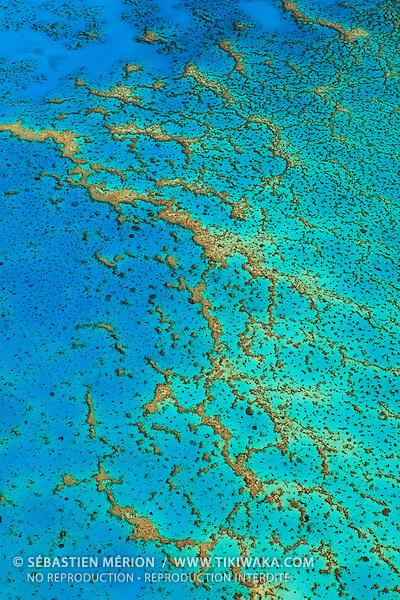 Corail à Vavuto (Koné), province Nord, Nouvelle-Calédonie