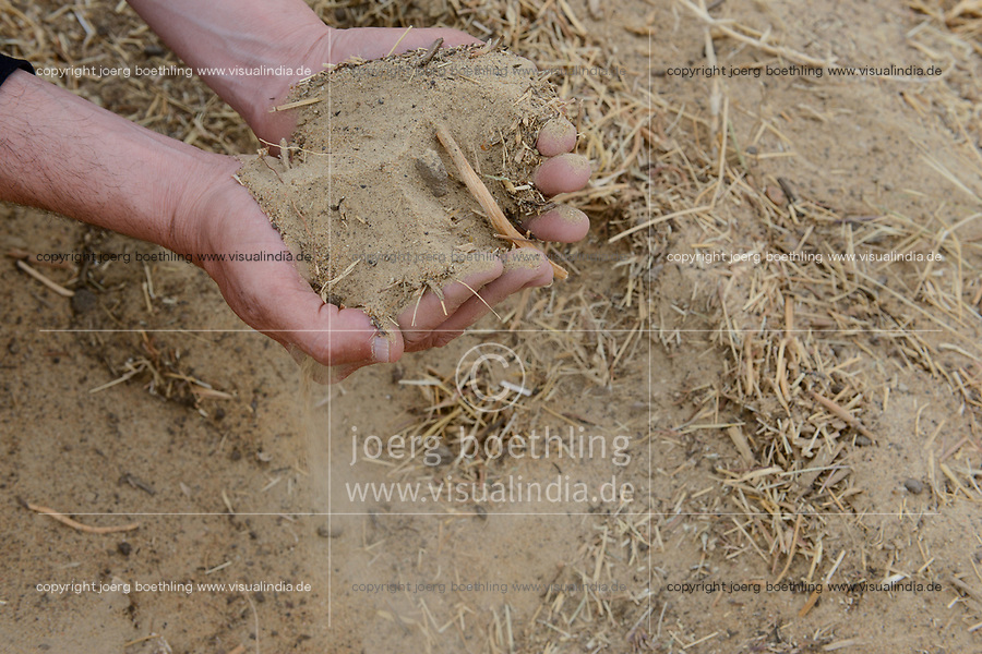 EGYPT, Bahariyya Oasis, Sekem organic farm, Project greening the desert , soil improvement step by step with compost / AEGYPTEN, Oase Bahariya, Sekem Biofarm, Landwirtschaft in der Wueste, schrittweise Bodenverbesserung mit Kompost