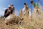 Earthwatchers with Leopard Tortoise