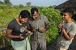 Fishing Cat (Prionailurus viverrinus) biologists, Anya Ratnayaka, Maduranga Ranaweera, and Tharindu Bandara, setting up camera traps in urban wetland, Urban Fishing Cat Project, Diyasaru Park, Colombo, Sri Lanka