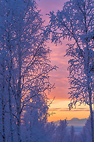 Winter sunrise over boreal forest and Alaska Mountain Range, Mount Moffit.