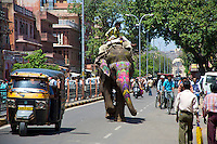 Jaipur street scene,  Elephant walking the main street in Jaipur Rajasthan India