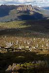 View on Ducane mountains from Mt Ossa...Vue sur le massif Ducane