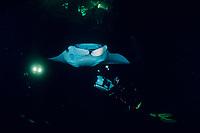 videographer and reef manta ray, Manta alfredi, feeding on plankton attracted by the lights of a dive boat, the Kona Agressor II, Kona, Big Island, Hawaii, Pacific Ocean