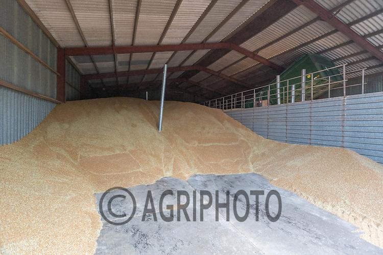 Wheat in a flat floor grain store<br /> Picture Tim Scrivener 07850 303986