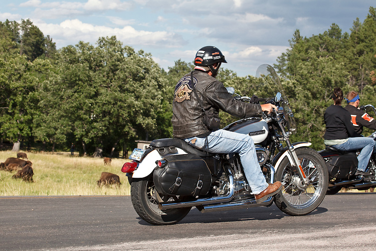 A motorcycle rider from Kansas City watches the Bison in the Black Hills at Custer State Park near Custer, South Dakota on August 13, 2010.
