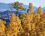 Aspen fence, Boulder Mountain, Henry Mountains, Utah