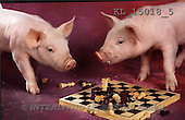 Interlitho, Alberto, ANIMALS, pigs, photos, pigs, chess(KL15018/5,#A#) Schweine, cerdos