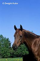 SH06-005z  Arabian Horse - mare