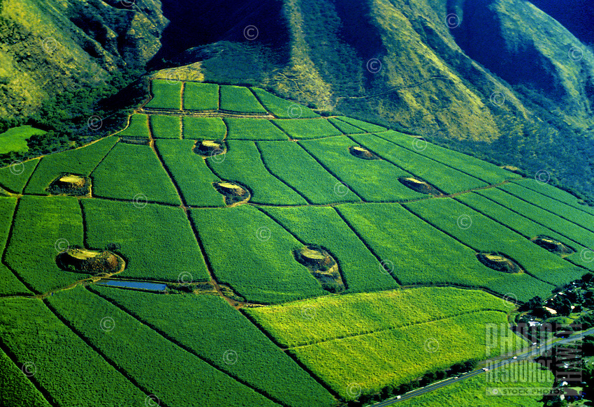 Brilliant lush green sugar cane fields at the foot of  the West Maui mountains.