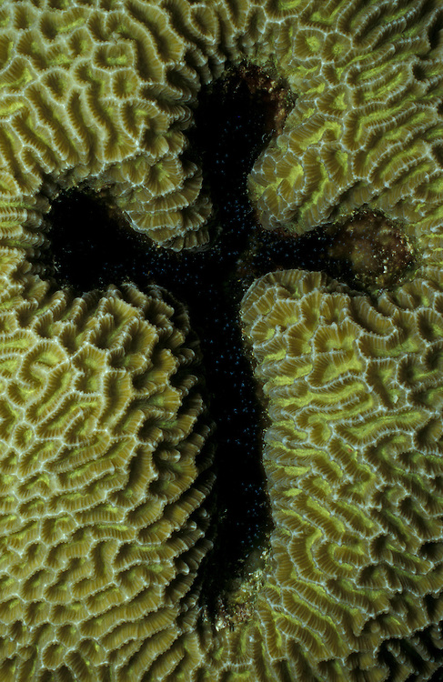 Natural coral formation in the shape of a cross / crucifix, South Ari Atoll, Maldives