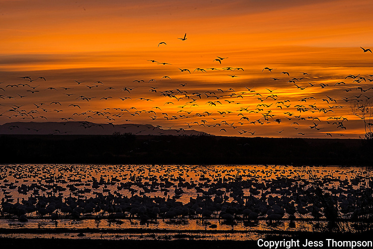 Sunset, Bosque del Apache NWR