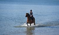 Sea horse - Rider enjoys the flat calm sea in Weymouth  Bay