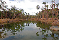 Date palm trees line a lagoon in San Ignacio, Baja Califoirnia, Mexico