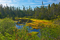 Wetland at entrance to Atlantic Ocean, Marie Joseph, Nova Scotia, Canada