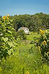 Bauer Park Community Garden. Madison, CT. Farmhouse and garden view.
