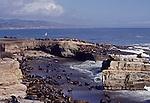 Sea lions on Ano Nuevo Island
