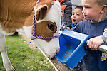 From left, Clayton Hoggatt, 6, and Ryder Rubke, 6, participate in the cow plop fundraiser at Fremont Elementary School in Carson City, Nev., where they were able to meet Buttercup, a Holstein Ayrshire mix, Friday, April 15, 2016.<br />