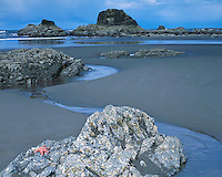 Starfish on a rock at low tide on the Pacific Ocean at Ruby Beach; Olympic National Park, WA