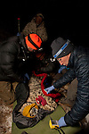 Snow Leopard (Panthera uncia) veterinarians, Ric Berlinski and John Ochsenreiter, with ranger, Zoldoshbek Bektemirov, checking vitals during collaring of male snow leopard, Sarychat-Ertash Strict Nature Reserve, Tien Shan Mountains, eastern Kyrgyzstan