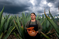 "Mexico, Guanajuato, San Miguel de Allende, Lagunilla. Pulque Ranch. Beatriz and her husband Francisco live in the community of Lagunilla. They have two large maguey fields where they produce pulque, a traditional beverage. Pulque is an ancient drink extracted from the maguey cactus. It is first harvested as a sweet honey-like juice called ""aguamiel,' that is then mixed with the older fermented juice kept in clay pot which makes the pulque. This is about 5% alcoholic and filled with nutrients. The plants take about ten years to mature, and the plants will produce juice for about three months. The heart of the cactus fills with liquid and is scraped three times a day for its juices. It is considered the beverage of the gods."