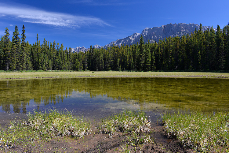 Small lake close to Elkwood camp ground, Peter Lougheed Provincial Park, Kananaskis