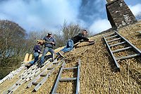 BNPS.co.uk (01202 558833)<br /> Pic: ZacharyCulpin/BNPS<br /> <br /> Pictured: Thatchers (from left), Ryan Satchell, Scott Symonds and Kieran Walsh work on the cottage.<br /> <br /> Master thatcher Scott Symonds puts the finishing touches to the new straw roof at the former home of Victorian author Thomas Hardy.<br /> <br /> The National Trust, which owns the picturesque cottage near Dorchester, Dorset, has closed the historic property for more than a month while it undergoes vital conservation work.<br /> <br /> On the inside new structural supports have been installed and the stone floor repointed after taking a battering from thousands of visitors over the years.<br /> <br /> And on the outside the roof has been re-thatched by Scott and his dad Dave who even appeared was an extra in the 2015 film adaptation of Hardy's Far From the Madding Crowd.