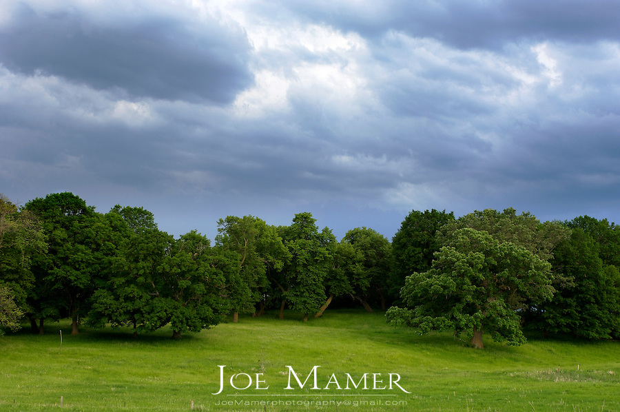 Storm clouds gather over a grove of trees in a green pasture.
