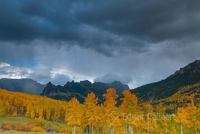 Approaching Storm, Aspens, Populus tremula, Cimarron Ridge, Precipice Peak, Uncompahgre National Forest, Colorado