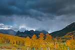 Approaching Storm, Aspens, Populus tremula, Cimarron Ridge, Precipice Peak, Uncompahgre National Forest, Colorado