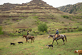 USA, Oregon, Joseph, Cowboy Cody Ross moves cattle from the Wild Horse Drainage down to the canyon floor by Big Sheep Creek