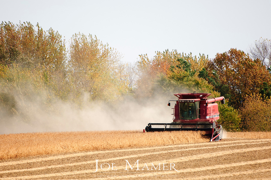 A combine harvester in the field harvesting soy beans on a windy day. Dust from the expelled plant material as well as top soil  blow behind the combine.