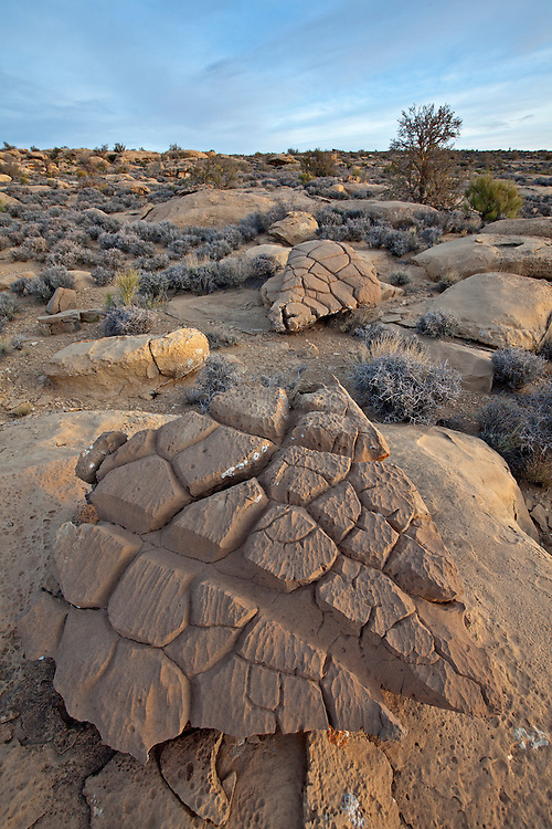 Bizarre rock formations on the Kaiparowits Plateau near the Kelly Grade Overlook in the Grand Staircase-Escalante National Monument, Utah, USA