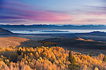 A photo of yellow autumn aspens and Mono Lake and the sunrise in California