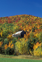 barn, fall, Barnet, VT, Vermont, Brown barn surrounded by colorful fall foliage in Barnet in the autumn.
