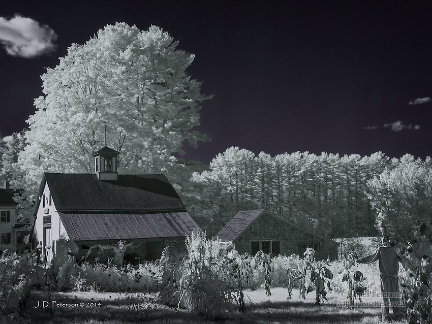 Barn and Shed with Scarecrow, Kennebunk, Maine (Infrared)
